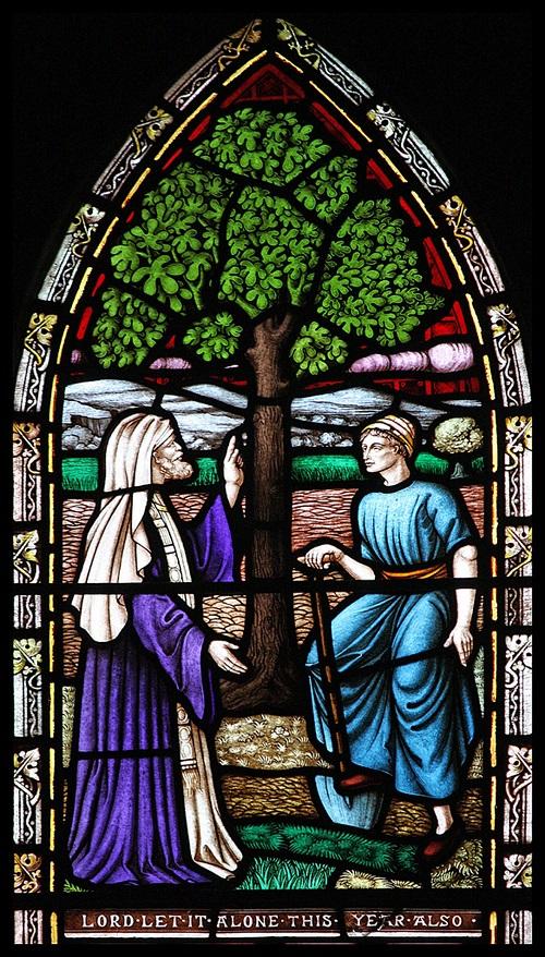 Il fico e la misericordia contro natura