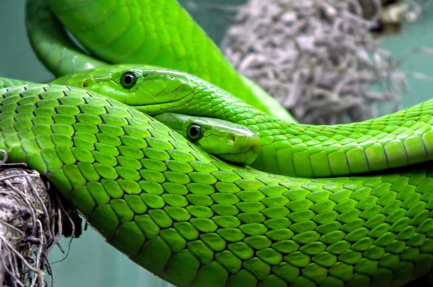 Perché nella Bibbia il diavolo è associato al Serpente?