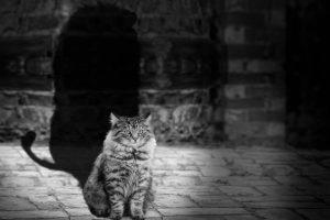 cat-564202_1280